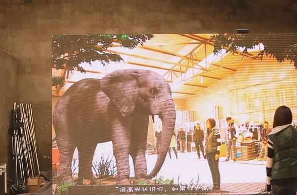 广西商场大象AR大屏互动